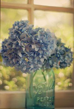 Hydrangeas one of my favs