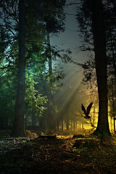 lights, bird, forests, magic, nature
