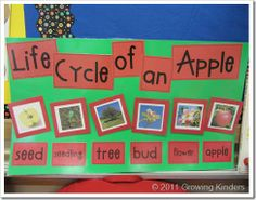 Very cute life cycle of an apple