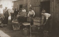 Jewish workers put out their produce in boxes and pails in front of a wooden shed. [Photograph #24917]