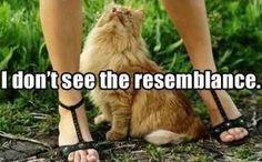 funny, funny kitty cats, funni stuff, laugh, funny captions, funny cats, funny pictures, funny photos, humor, resembl