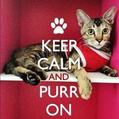 Purr On!!