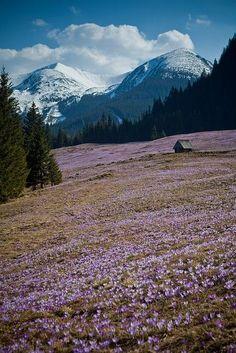Tatra Mountains, Poland. Chocholowska Valley in spring.