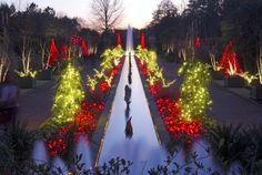 botan garden, holiday imag, canal garden, garden 2013, light