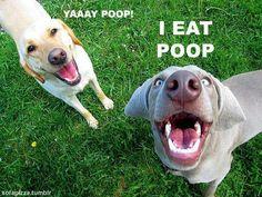 let's hear it for poop!!