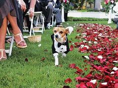 Dog in tux.