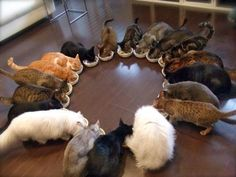 Sunday Brunch at The Crazy Cat Lady's House.