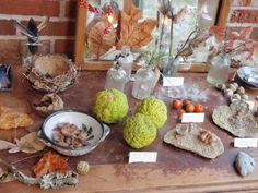 nature display in homeschooling home