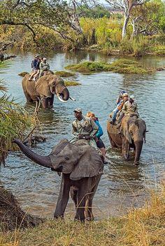 Elephant Safari, Zambezi River near Victoria Falls, Zambia