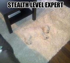 stealth level expert