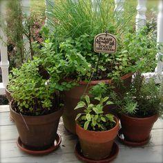 herb garden..