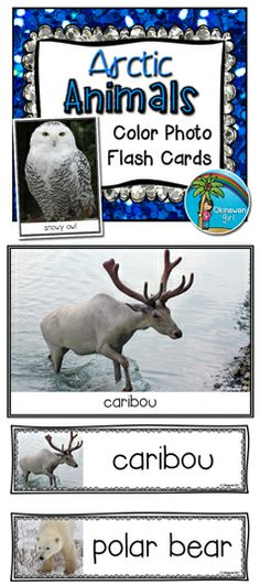 Arctic Animals A4 color photo flash cards and headers.  Featuring 8 arctic animals. $
