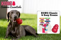 Mix up a batch of KONG Easy Freeze frozen treats and stuff into their KONG Classic toy for a refreshing summer snack.