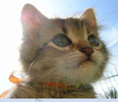 82 Astounding Facts About Cats