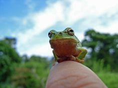perch on finger