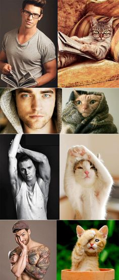 Cats that look like male models....i seriously love cats...i will probably end up being a cat lady...it's all good though!
