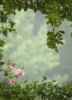 vines and roses