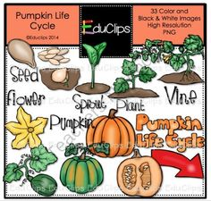 Pumpkin Life Cycle Clip Art Bundle from Educlips on TeachersNotebook.com -  (33 pages)  - Pumpkin Life Cycle Clip Art Bundle
