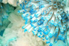 display photos, color blue, underwater theme, window displays, thing blue, anthropologi earth, sea, earth day, coral reefs