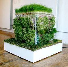 CUBO's outside layer is made from live, edible micro-greens. The interior houses a multi-channel, surround sound, speaker system.