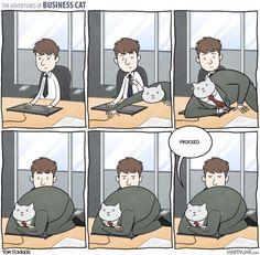 Business Cat: Keyboard