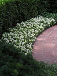 white ~ FLOWER BORDER ~ I love white in the garden ~ they show up at night in the moon light! lights, flower border, white flowers, french tangerin, landscap lawn, gardens, white garden, blog, walk