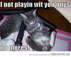 funny animals, shelter dogs, animal pictures, funny cat photos, silly cats