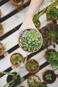 Learning about indoor plants / indoor gardening