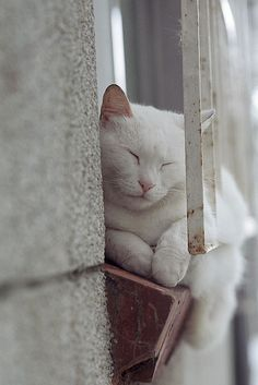 White Cat by KT Lee on Flickr