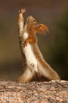 Dramatic interpretive dance squirrel.