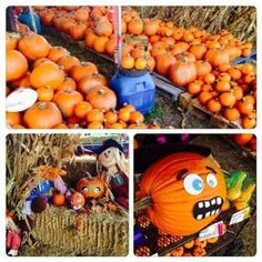 The pumpkins have arrived in Wilton Manors! Kiwanis Pumpkin Patch Wilton Manors