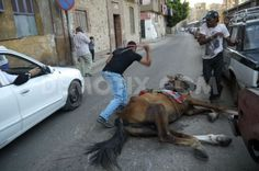 EGYPTIANS BEATING A HORSE THAT CANNOT STAND. please sign, apparently the local 'authorities' are unaware of this barbarity that is occurring under their noses!!!! ONLY BY SIGNING WILL YOU SHAME THEM