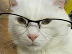JUPITER- TALKING CAT.