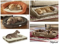 How to Find the Best Bed for Your Dog