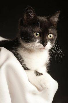 black & white kitten....so cute <3