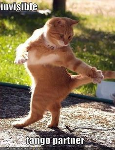 Funny cat pictures - #LOL