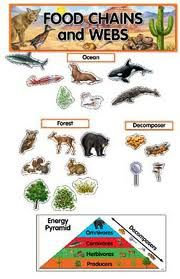 Food chains and webs.