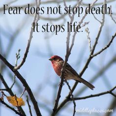 Some thoughts on fear - and fearing not.  <3