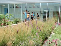 Roy Diblik incorporated perennials into the rooftop vegetable garden at the Gary Comer Youth Center in Chicago. Photo by Roy Diblik, co-owner of Northwind Perennial Farm in Burlington, WI.