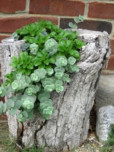Succulents in a tree trunk planter make a nice contrast of textures.