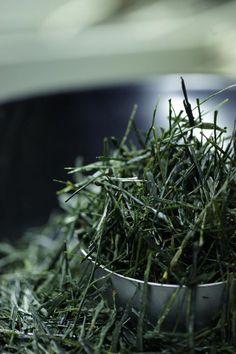 Japanese tea instructor Nishikien owner's blog