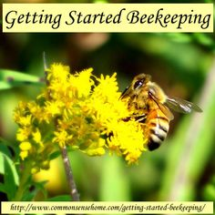 Getting Started Beekeeping @ Common Sense Homesteading