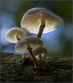 mushrooms enlight
