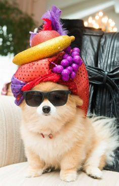 They call me Cuban Pete. I'm the king of the rumba beat.  When I play the maracas I go chick-chicky-boom, chick-chicky boom