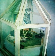 hermit crabs in a terrarium!   ...........click here to find out more     http://googydog.com