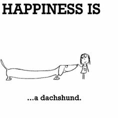 Happiness is...a dachsund.