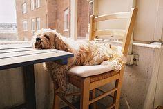 dinner, dog days, anim, funny dogs, dog photos