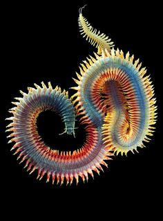 Sea creatures. Nature