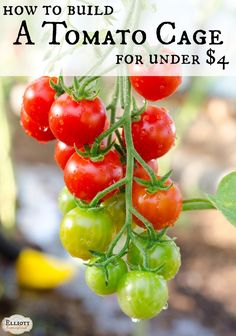 How To Build A Tomato Cage For Under $4