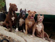 Pittie Mod Squad